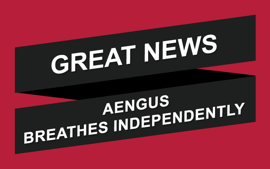 Aengus Breathes Independently